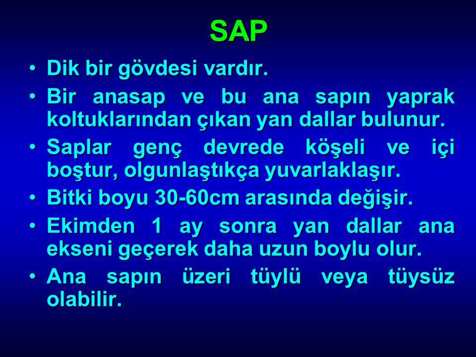 SAP Dik bir gövdesi vardır.