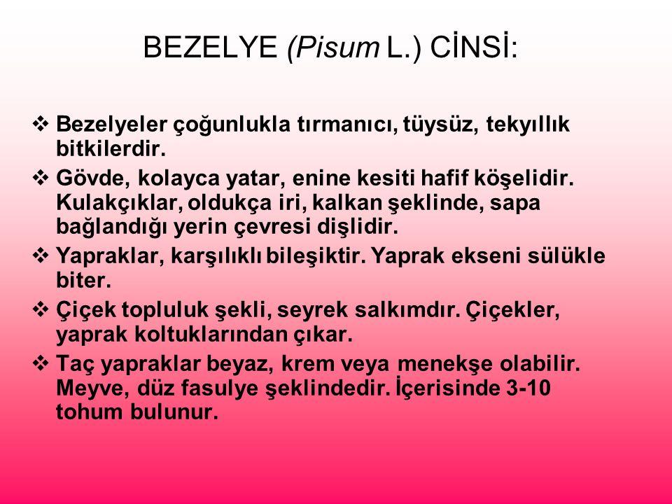 BEZELYE (Pisum L.) CİNSİ: