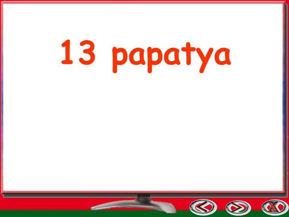 13 papatya
