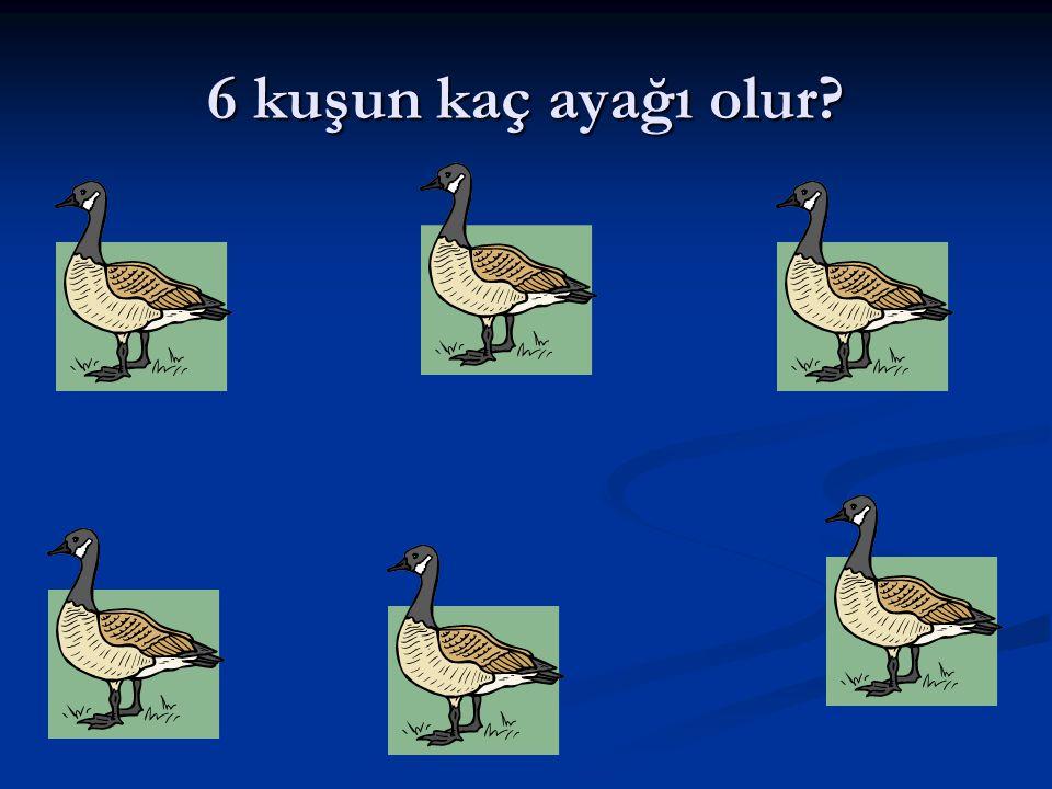 6 kuşun kaç ayağı olur