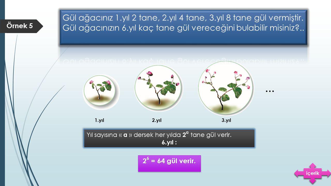 Gül ağacınız 1. yıl 2 tane, 2. yıl 4 tane, 3. yıl 8 tane gül vermiştir