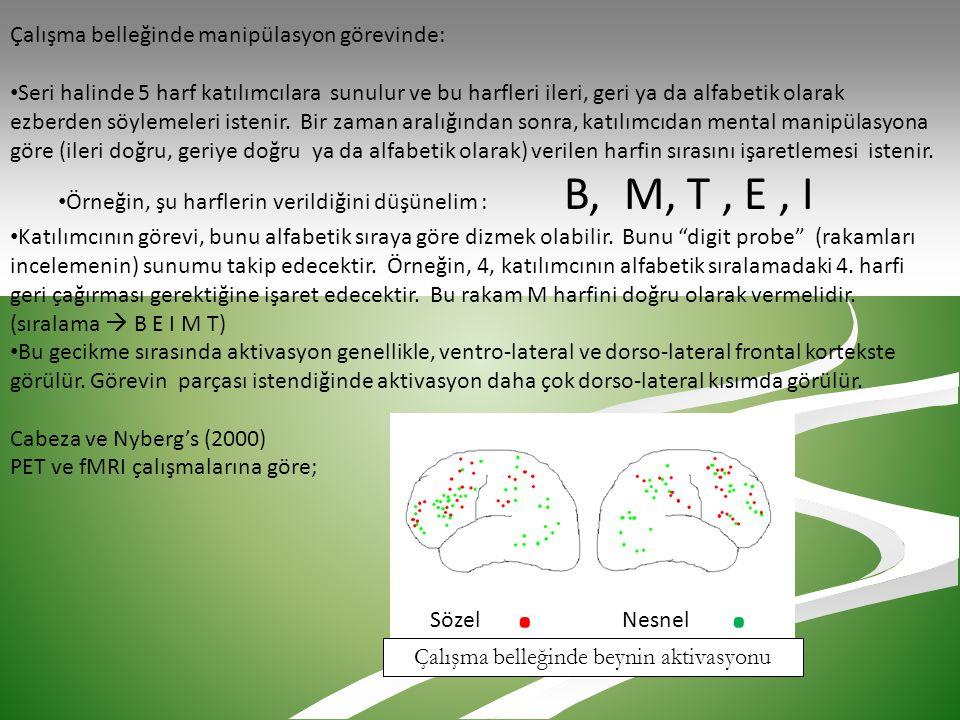 Çalışma belleğinde beynin aktivasyonu