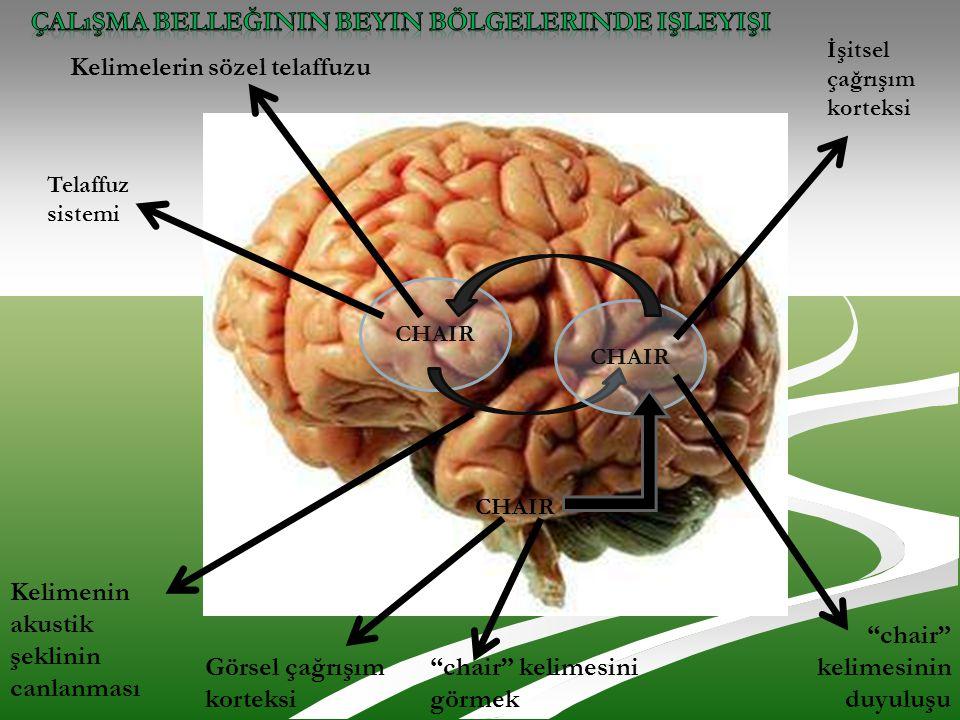 Çalışma belleğinin beyin bölgelerinde işleyişi