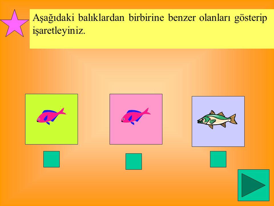 Aşağıdaki balıklardan birbirine benzer olanları gösterip