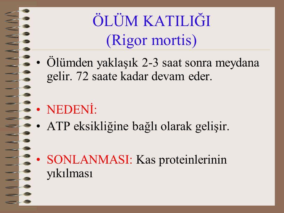 ÖLÜM KATILIĞI (Rigor mortis)