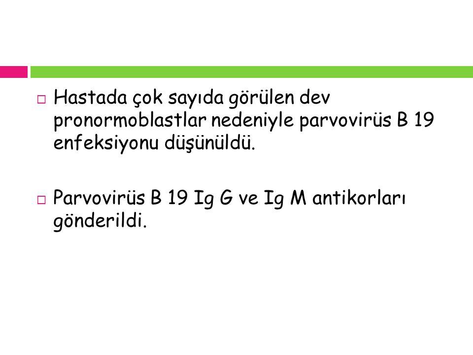 Hastada çok sayıda görülen dev pronormoblastlar nedeniyle parvovirüs B 19 enfeksiyonu düşünüldü.