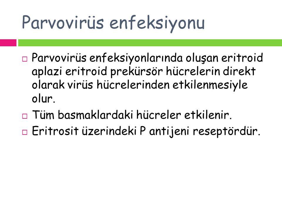 Parvovirüs enfeksiyonu