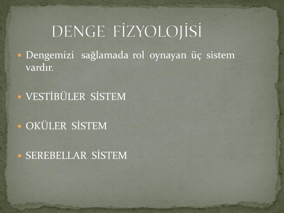 DENGE FİZYOLOJİSİ Dengemizi sağlamada rol oynayan üç sistem vardır.