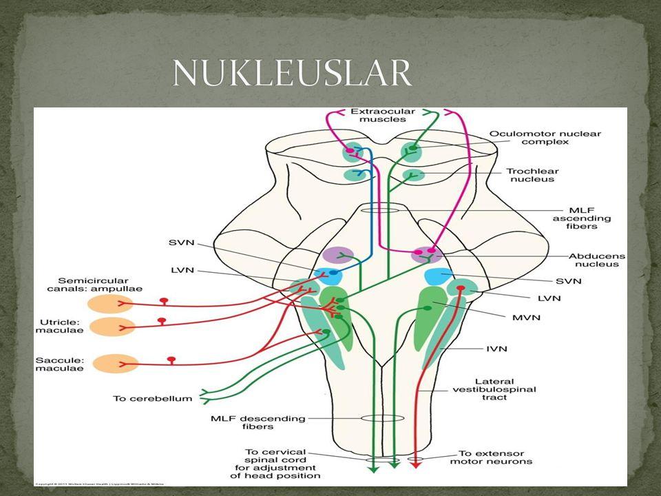 NUKLEUSLAR