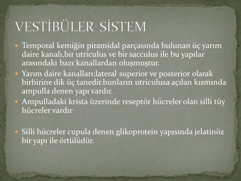 VESTİBÜLER SİSTEM