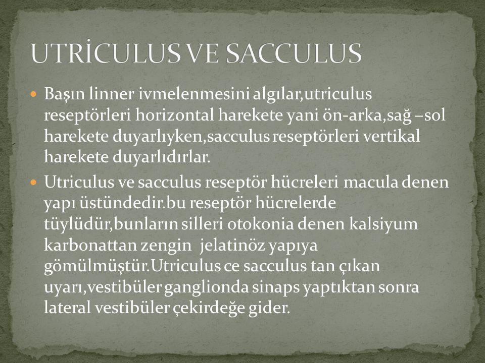 UTRİCULUS VE SACCULUS