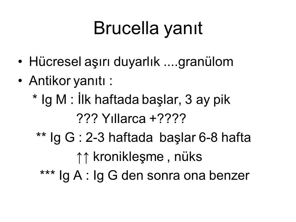 Brucella yanıt Hücresel aşırı duyarlık ....granülom Antikor yanıtı :