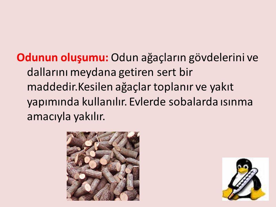 Odunun oluşumu: Odun ağaçların gövdelerini ve dallarını meydana getiren sert bir maddedir.Kesilen ağaçlar toplanır ve yakıt yapımında kullanılır.
