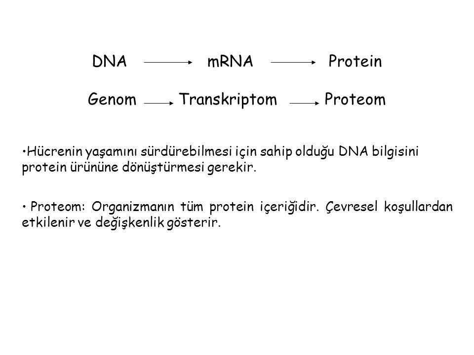 Genom Transkriptom Proteom