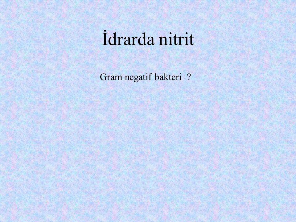 İdrarda nitrit Gram negatif bakteri
