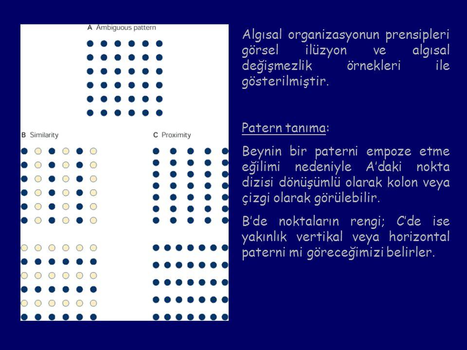 Algısal organizasyonun prensipleri görsel ilüzyon ve algısal değişmezlik örnekleri ile gösterilmiştir.