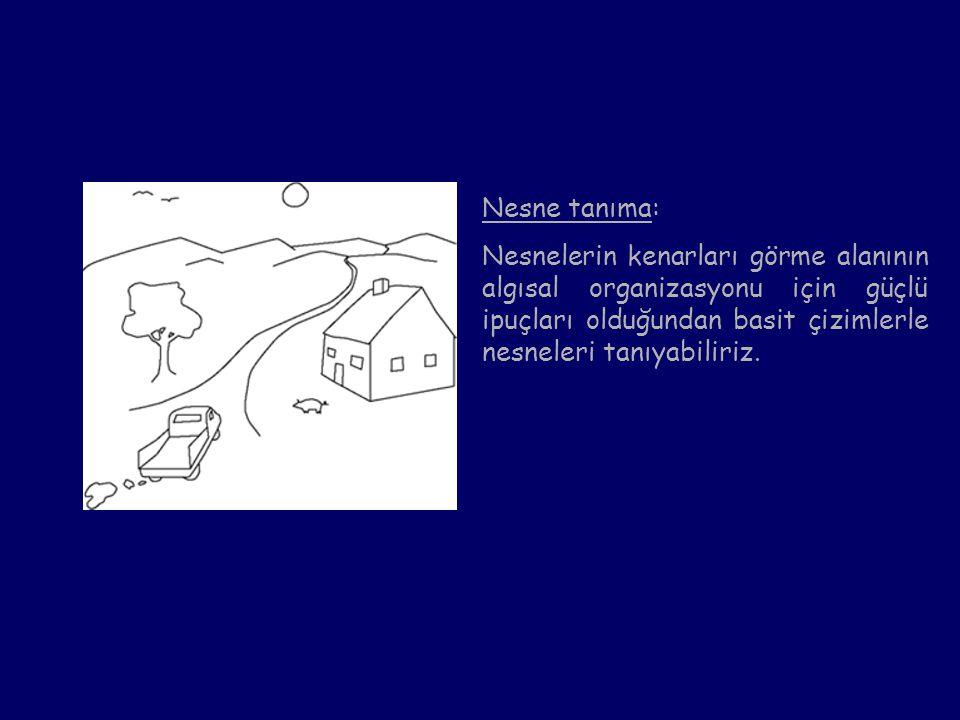 Nesne tanıma: Nesnelerin kenarları görme alanının algısal organizasyonu için güçlü ipuçları olduğundan basit çizimlerle nesneleri tanıyabiliriz.