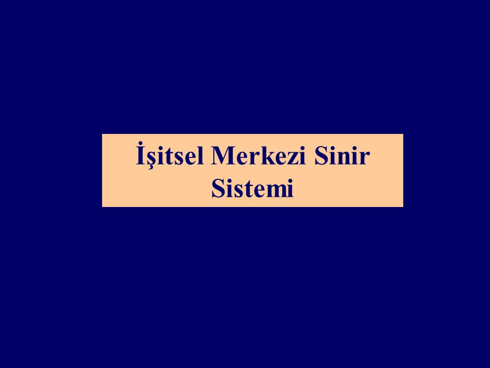 İşitsel Merkezi Sinir Sistemi