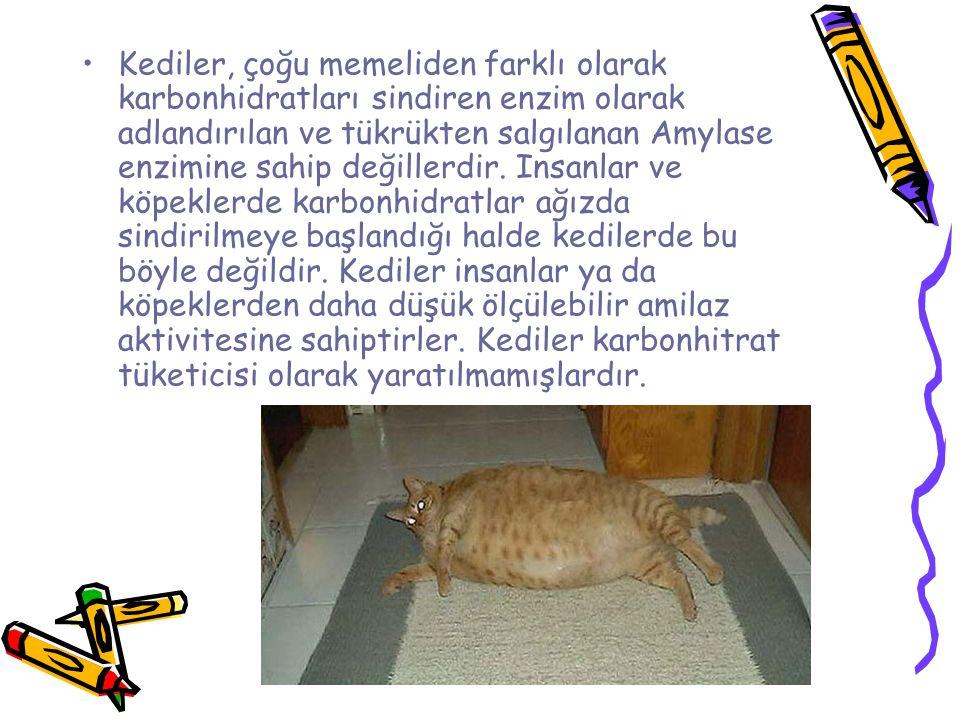 Kediler, çoğu memeliden farklı olarak karbonhidratları sindiren enzim olarak adlandırılan ve tükrükten salgılanan Amylase enzimine sahip değillerdir.