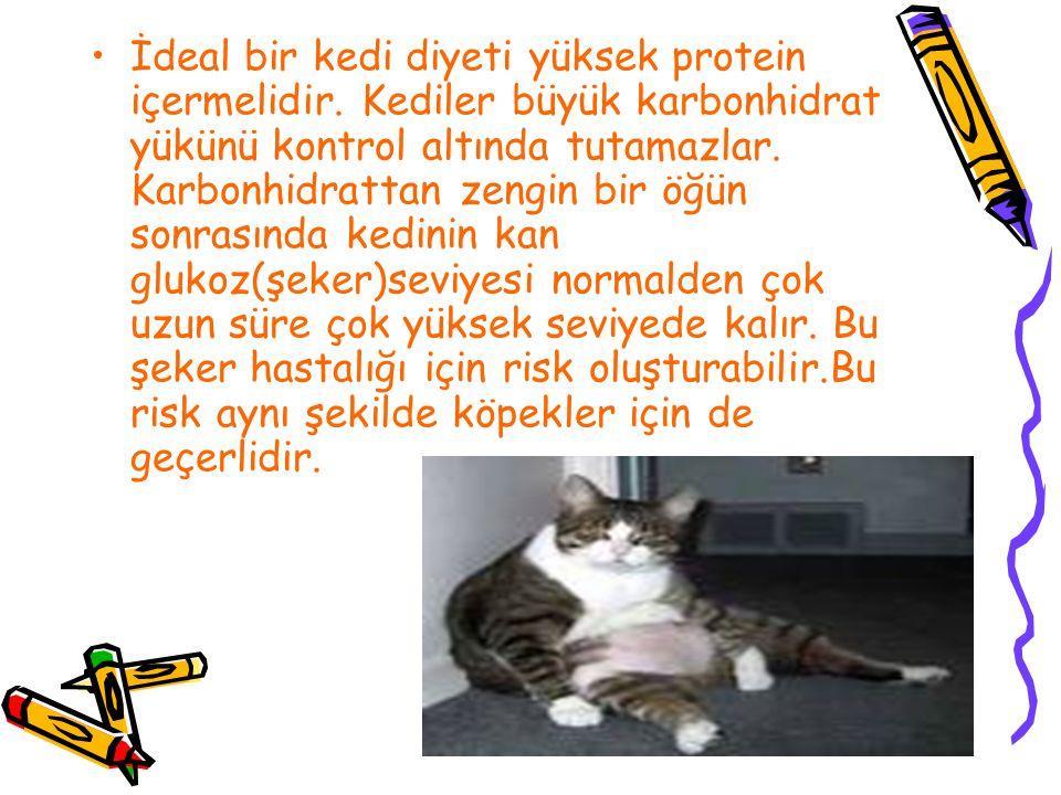 İdeal bir kedi diyeti yüksek protein içermelidir