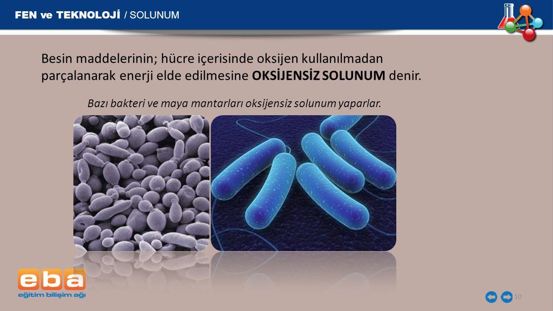 Bazı bakteri ve maya mantarları oksijensiz solunum yaparlar.