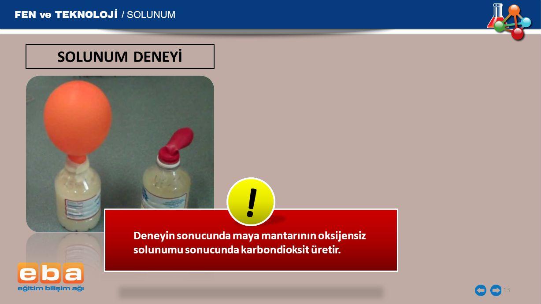 ! SOLUNUM DENEYİ FEN ve TEKNOLOJİ / SOLUNUM