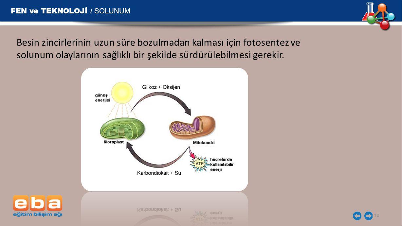 FEN ve TEKNOLOJİ / SOLUNUM