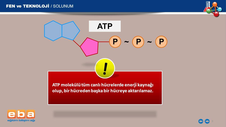 ! ATP P ~ P ~ P FEN ve TEKNOLOJİ / SOLUNUM