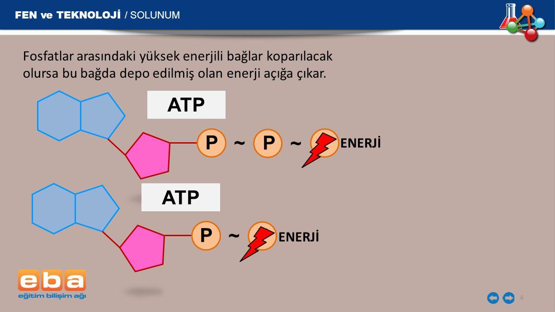 ATP P ~ P ~ P ATP P ~ P FEN ve TEKNOLOJİ / SOLUNUM