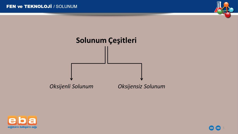 Solunum Çeşitleri FEN ve TEKNOLOJİ / SOLUNUM Oksijenli Solunum