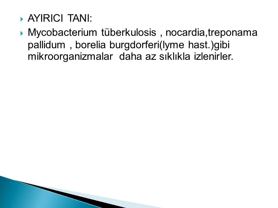 AYIRICI TANI: