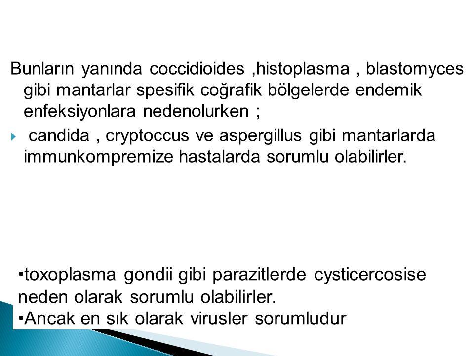 toxoplasma gondii gibi parazitlerde cysticercosise