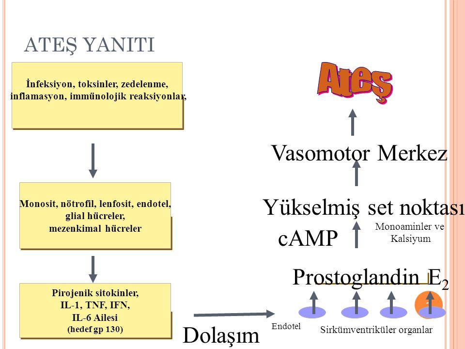 Ateş Vasomotor Merkez Yükselmiş set noktası cAMP Prostoglandin E2
