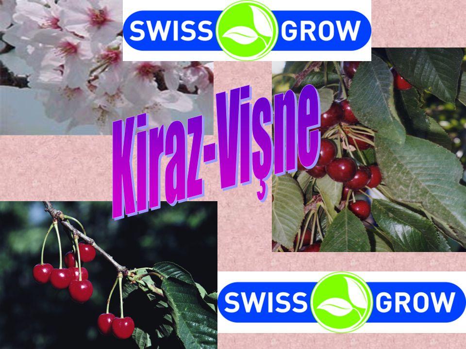 Kiraz-Vişne