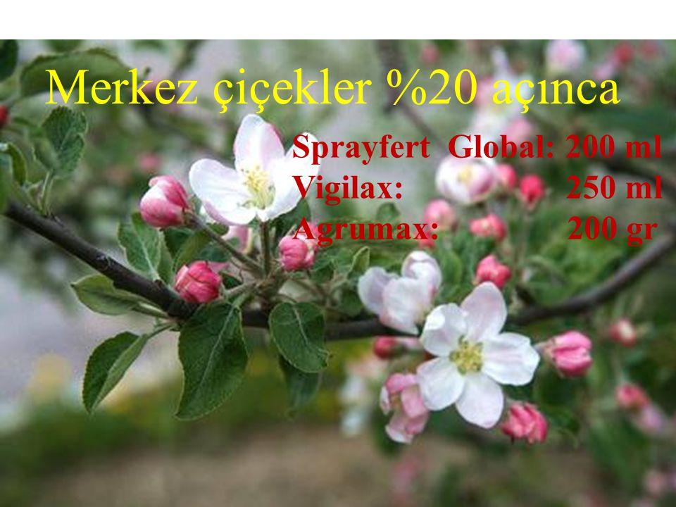 Merkez çiçekler %20 açınca