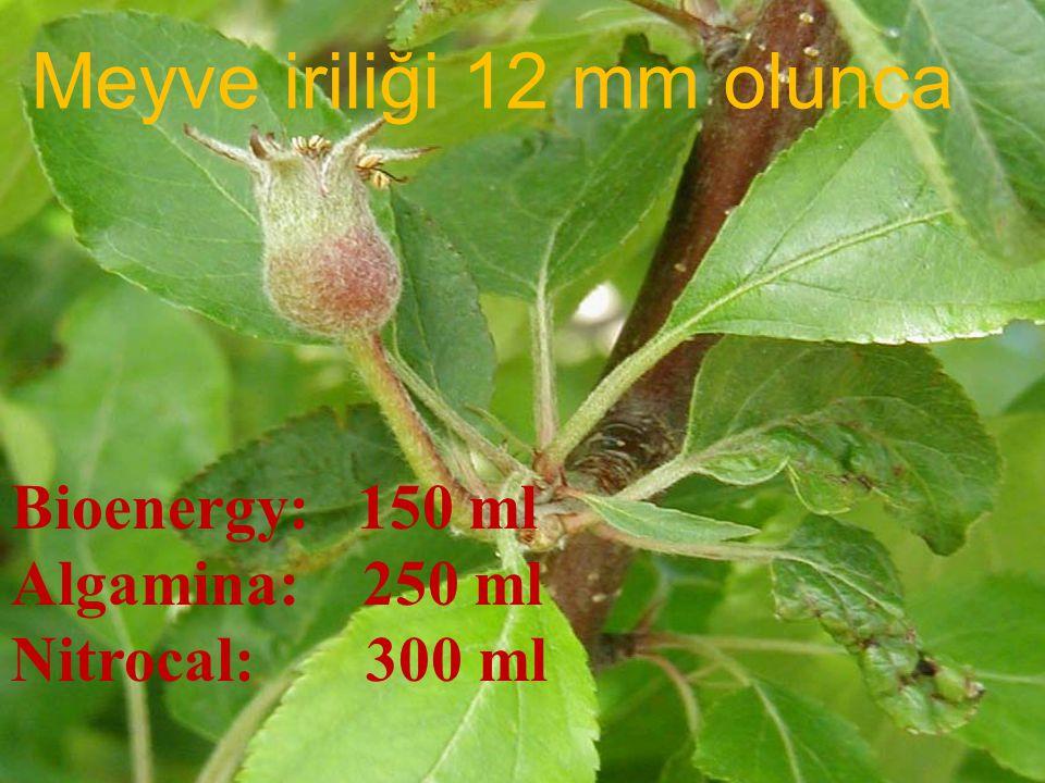 Meyve iriliği 12 mm olunca