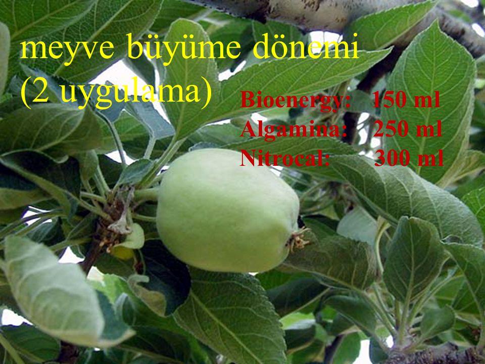 meyve büyüme dönemi (2 uygulama) Bioenergy: 150 ml Algamina: 250 ml