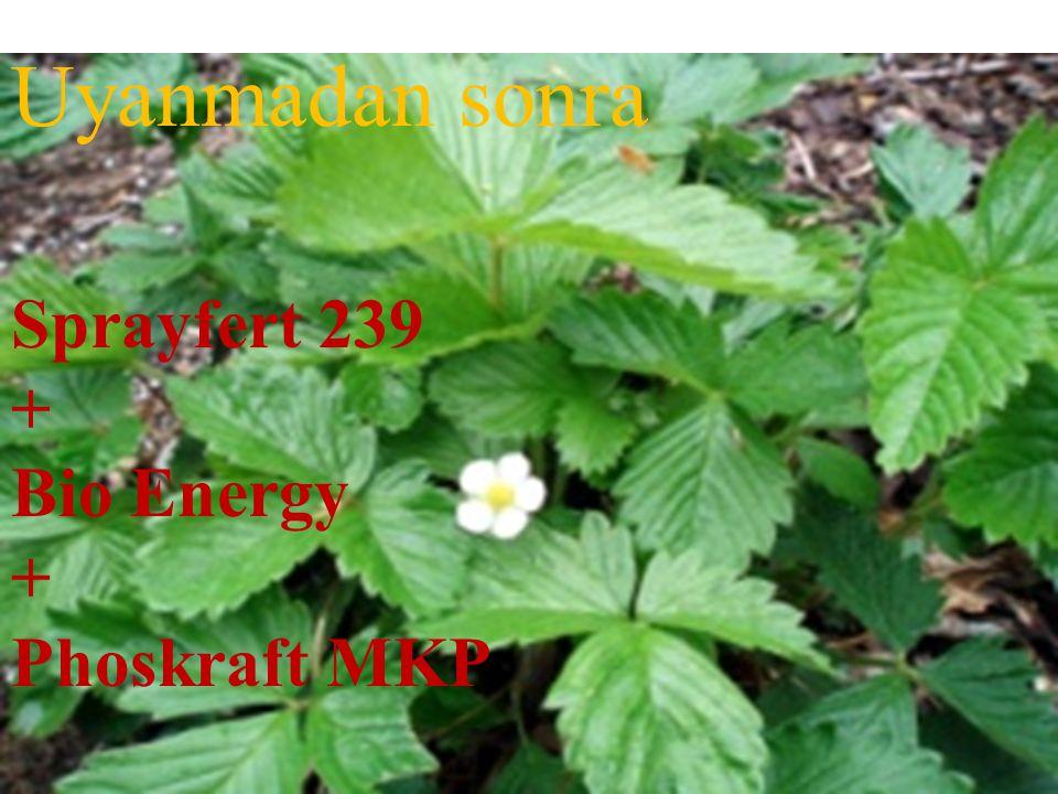 Uyanmadan sonra Sprayfert 239 + Bio Energy Phoskraft MKP