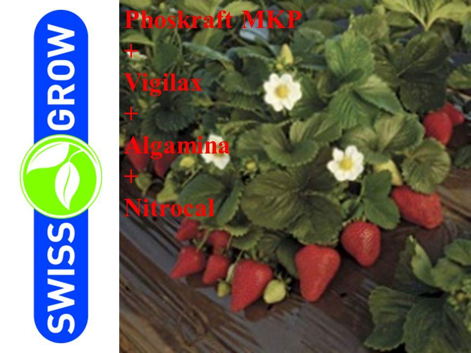 Phoskraft MKP + Vigilax Algamina Nitrocal