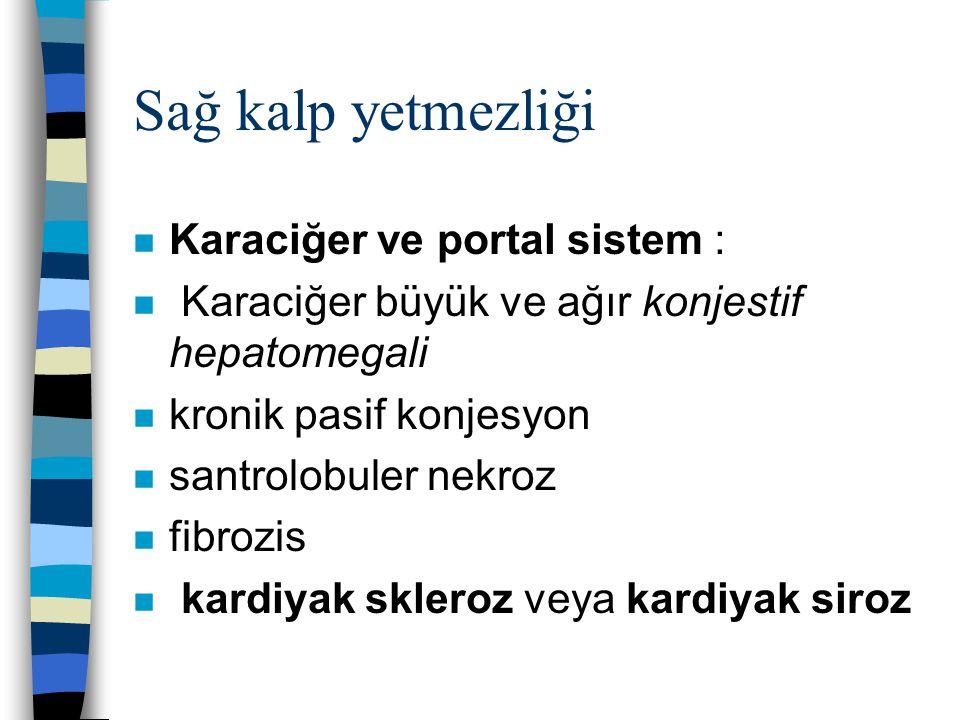 Sağ kalp yetmezliği Karaciğer ve portal sistem :