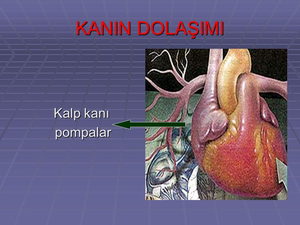 KANIN DOLAŞIMI Kalp kanı pompalar