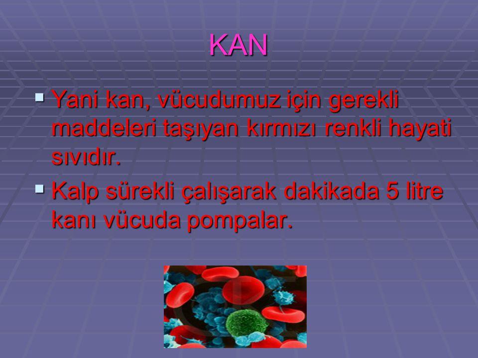 KAN Yani kan, vücudumuz için gerekli maddeleri taşıyan kırmızı renkli hayati sıvıdır.