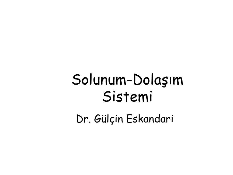 Solunum-Dolaşım Sistemi