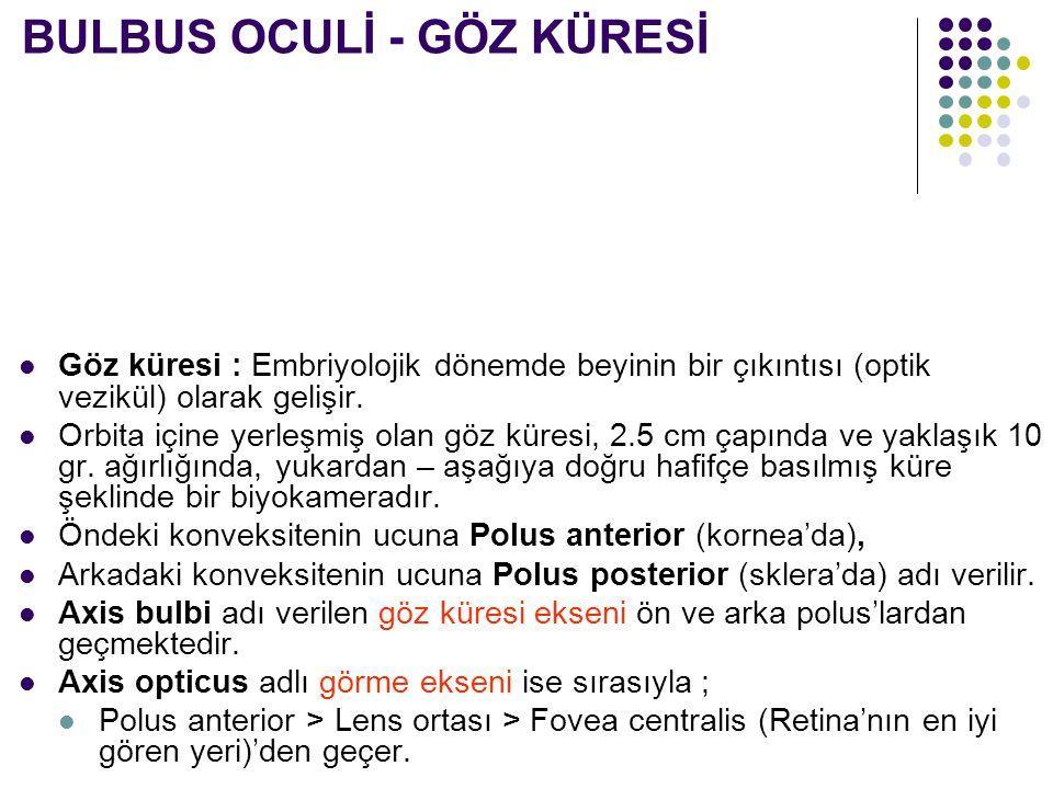 BULBUS OCULİ - GÖZ KÜRESİ
