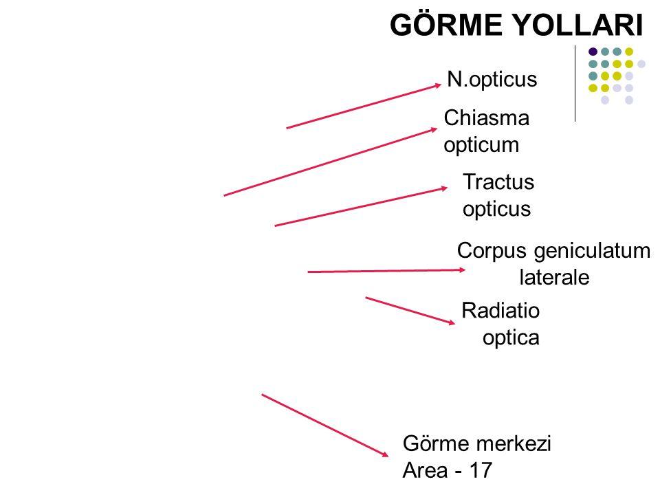 Corpus geniculatum laterale
