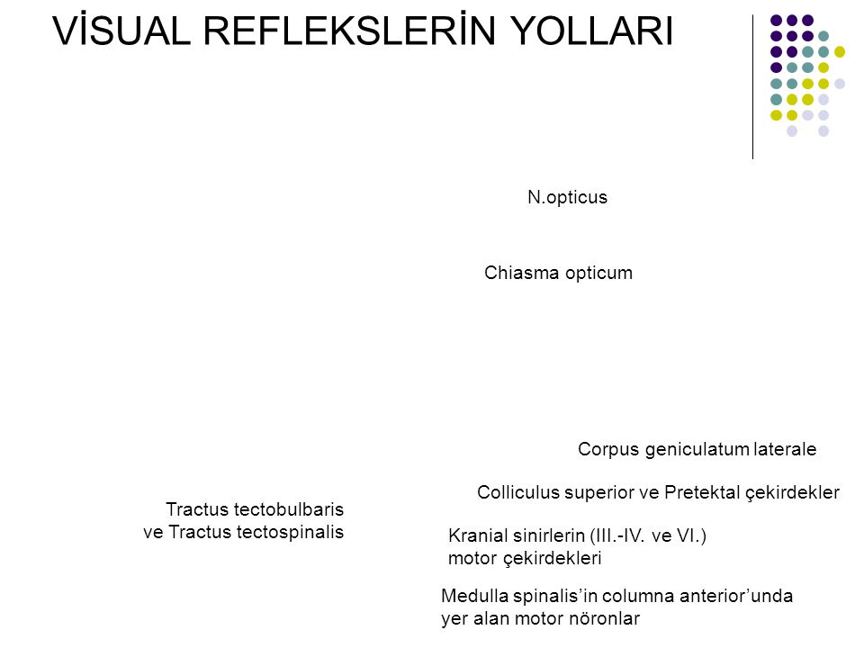 VİSUAL REFLEKSLERİN YOLLARI