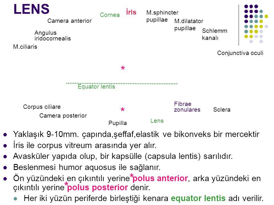 LENS İris. M.sphincter pupillae. Cornea. Camera anterior. M.dilatator pupillae. Schlemm kanalı.