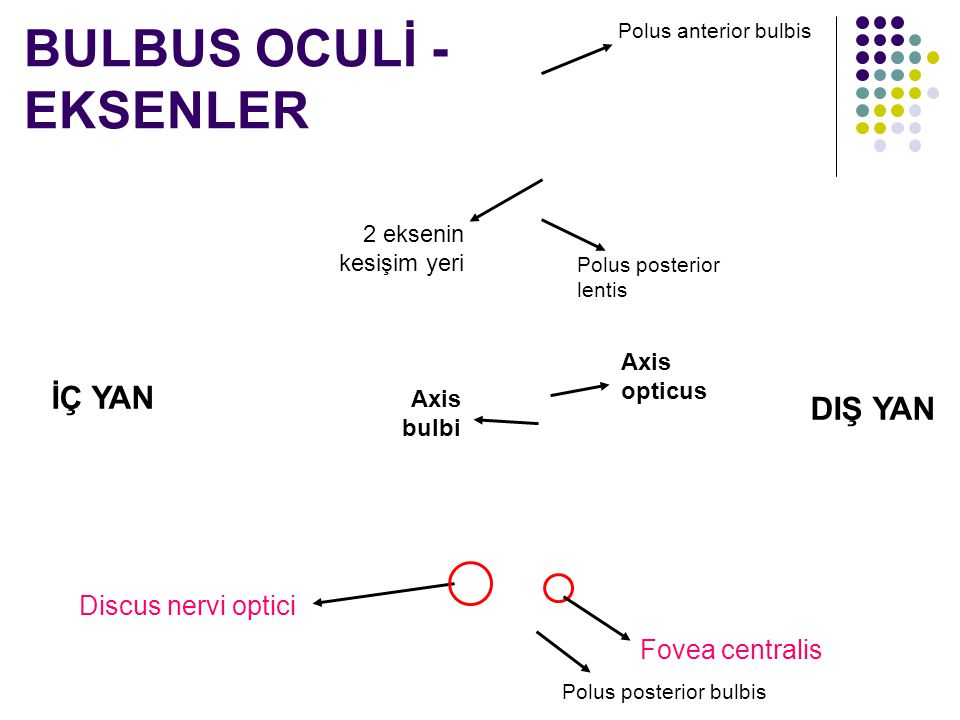 BULBUS OCULİ - EKSENLER