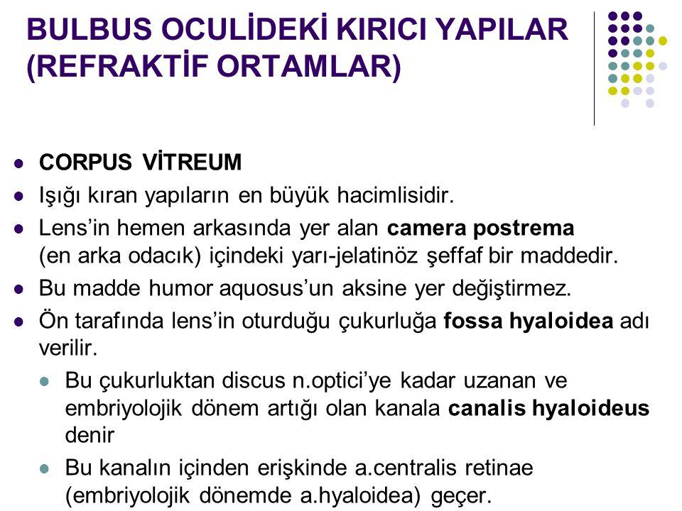 BULBUS OCULİDEKİ KIRICI YAPILAR (REFRAKTİF ORTAMLAR)