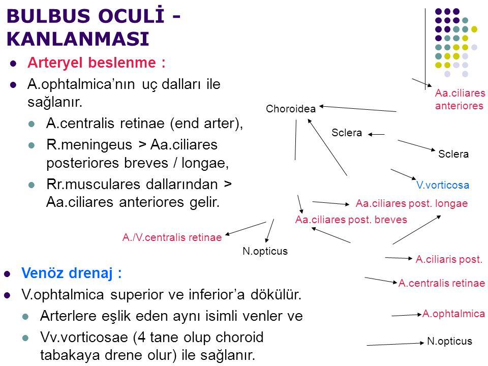 BULBUS OCULİ - KANLANMASI